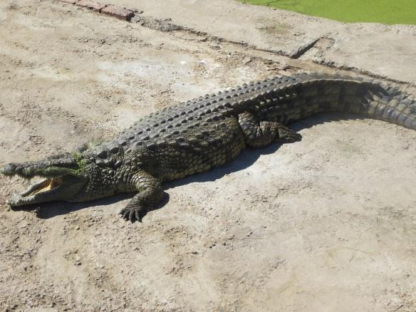 crocs8